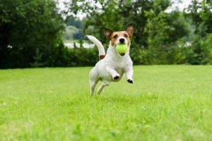 How to Train your Dog - image Accepted-Methods-for-Training on https://mydogtrainingcollar.com
