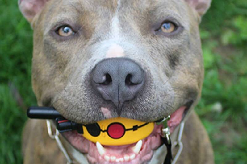 How Do Electric Dog Collars Work