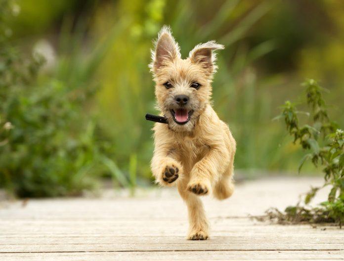 Best Wireless Dog Training Collar