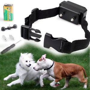 How Do Electric Dog Collars Work - image How-To-Use-An-Electric-Dog-Collar on https://mydogtrainingcollar.com