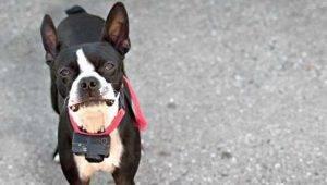 Best Dog Training Collar - Electronic Training Collar