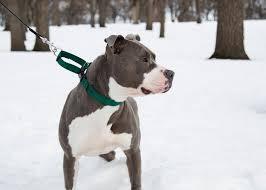 Petrainer Dog Training Collar [100% Waterproof] - image Petrainer-Dog-Training-Collar-100-Waterproof on https://mydogtrainingcollar.com