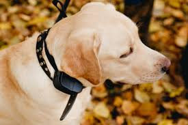 best wireless dog training collar
