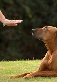 When to Start Dog Training