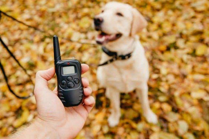 What are the best dog training collars