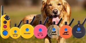 Educator E training dog collar
