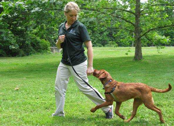 Teamworks dog training