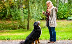 What are the best dog training collars?
