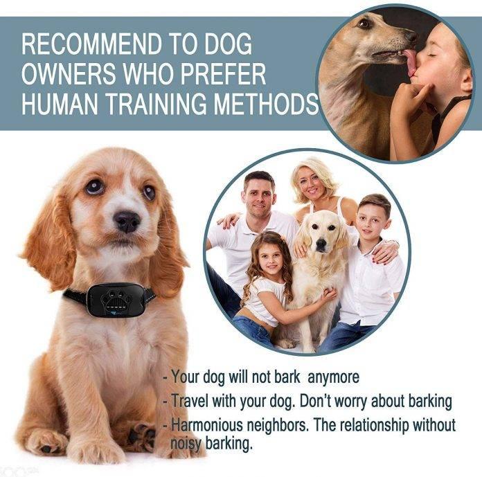 ZENNO No Bark Collar for dogs
