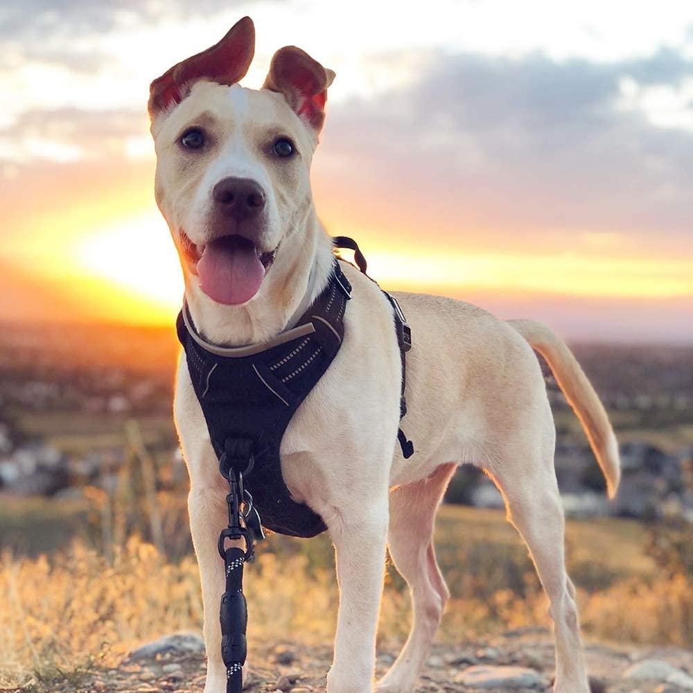 Rabbitgoo Dog Harness No Pull Pet My Dog Training Collar