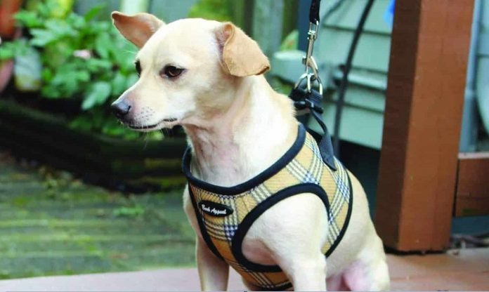 Best Velcro Dog Harness