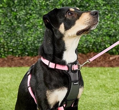 FRISCO Small Breed Dog Harness