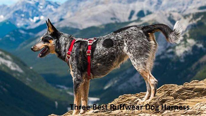 Three Best Ruffwear Dog Harness