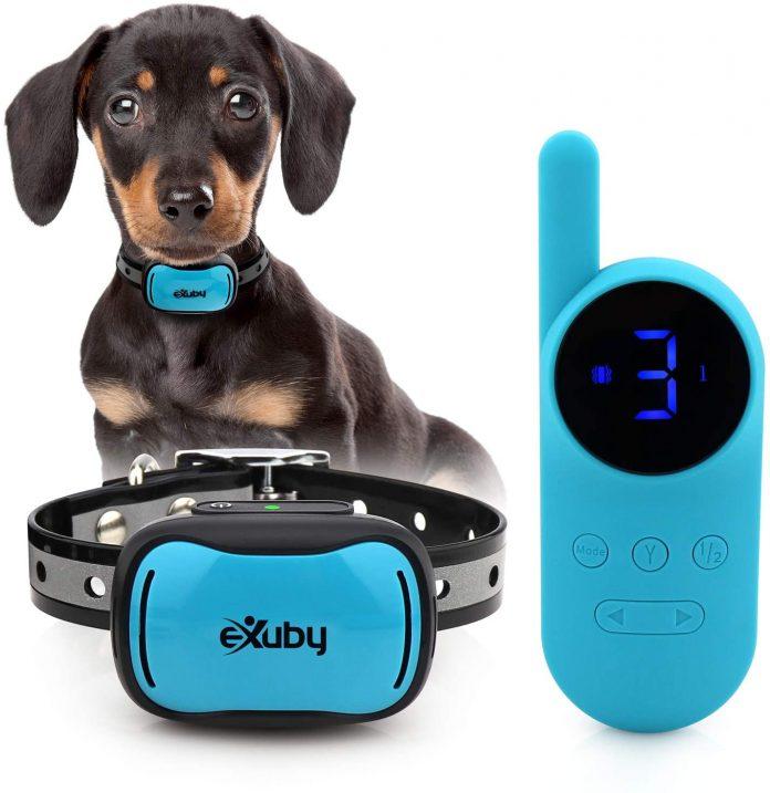Shock collar for 4lb dog
