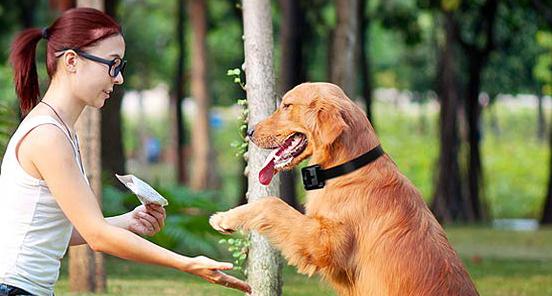 Sweatbones Dog Training Collar