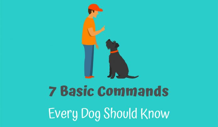 What Are The 7 Basic Dog Commands