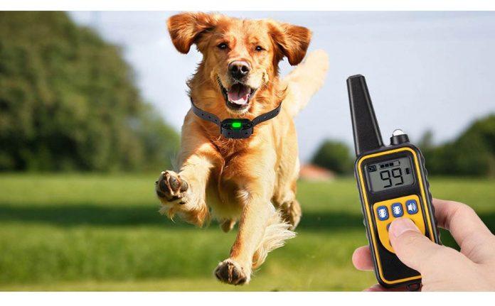 Eyeleaf Dog Training Collar