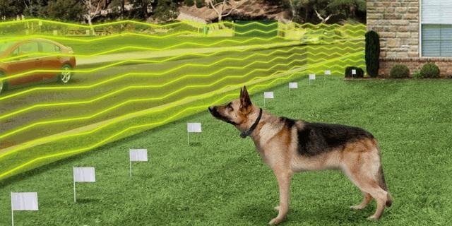Best Wireless Dog Fence in 2021