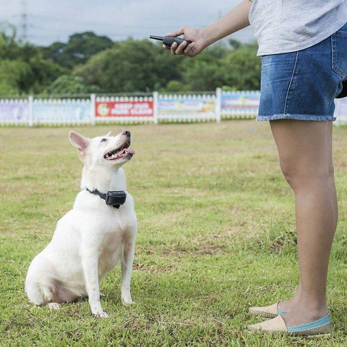 Pet Union Premium Dog Training Collar