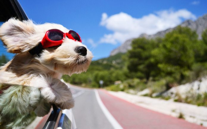 Tips for road trips with dogs