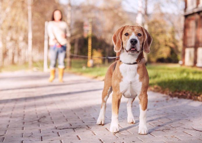 Best Dog Leash 2021