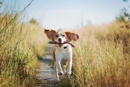 problems that can put your dog's life at risk